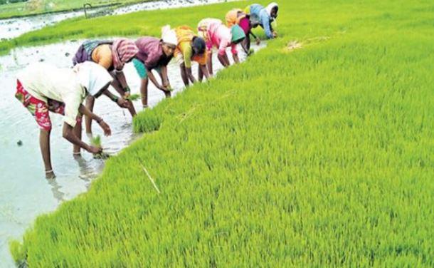 छत्तीसगढ़ से 60 लाख टन चावल खरीदेगी केंद्र सरकार