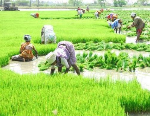 केंद्र सरकार ने एमपी में बाढ़ प्रभावित जिलों के किसानों के बड़ी राहत दी है।